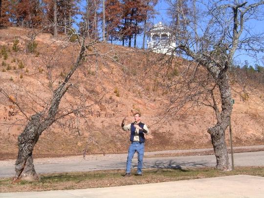 standing meditation trees