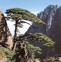 huangshan_mountain