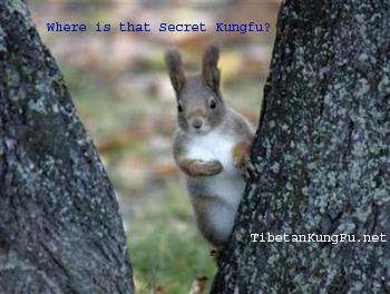 kung fu secrets image